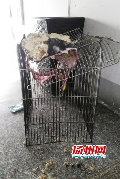 被烧坏的鼠笼