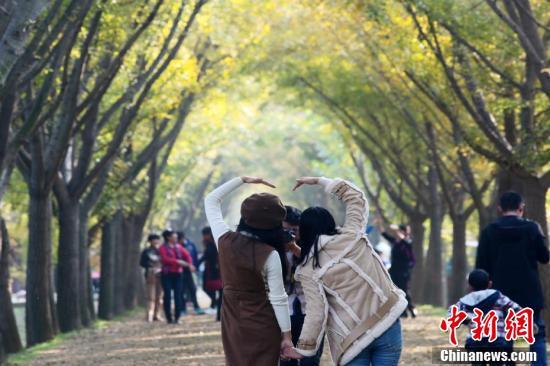 邳州银杏大道宛若时光隧道吸引游客赏玩
