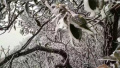 赣州于都县屏山牧场下雪 景区现雾凇景观(图)