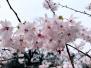 赏樱、插花、汉服秀……玄武湖樱花节开幕,让你嗨不停!