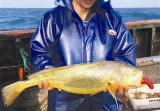 捞上了一条黄金!奉化渔民捕获4斤重野生大黄鱼