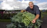 英老人种出巨型卷心菜
