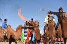 戈壁上的骆驼文化节