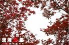 霜降过后枫叶红了 最美观赏枫叶目的地出炉