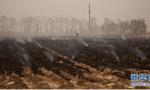 锦州市将组成6个联合督查组盯紧秸秆禁烧工作