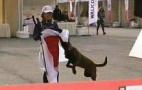 日本旗被中华犬抢走
