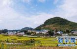 """贵州推广农村客运智能化应用""""通村村"""""""