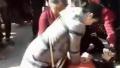 河南一年轻护士街头跪地救人 谈及这件事却哽咽了起来