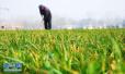 """山东农业""""新六产""""趟出新路子 提升农业发展质量"""