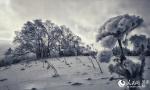 穿林海,跨雪原