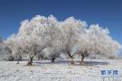 新疆阿勒泰现雾凇美景