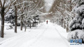 受北方大面积降雪影响 上海虹桥发往北京等地多趟列车停运