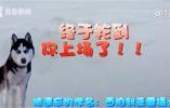 """真事!南京持续暴雪 主人让""""二哈""""做起雪橇犬"""