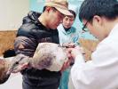 沈阳新民夫妇半路救了一只大鸟 全国才400只