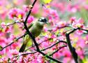 春色满园!来莫愁湖邂逅一场海棠花雨
