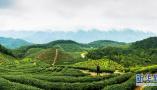 山东新型林业经营主体达23755个 数量位居全国前列