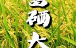 凯诚惠之农业科技:争做新时代健康产业的大引擎