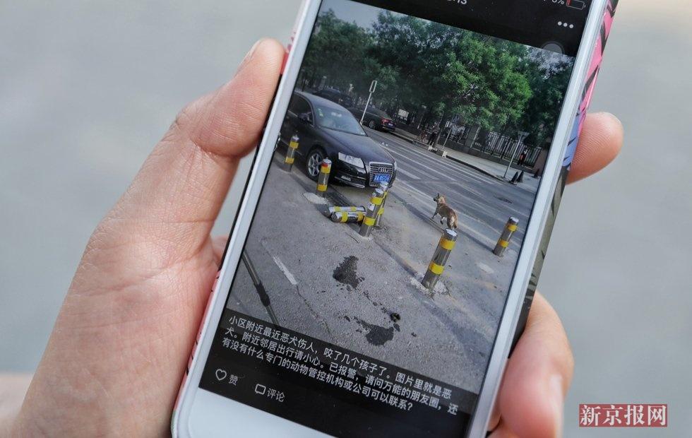新澳门金沙网上娱乐:北京朝阳区伤人犬只已被捕获!被咬伤男童脸缝30针