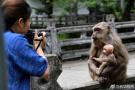武夷山的猕猴与人