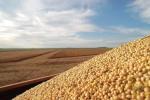 中国放弃美国大豆寻找新市场?俄罗斯笑了