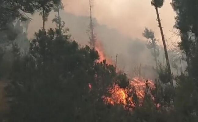 大理苍山突发森林火灾