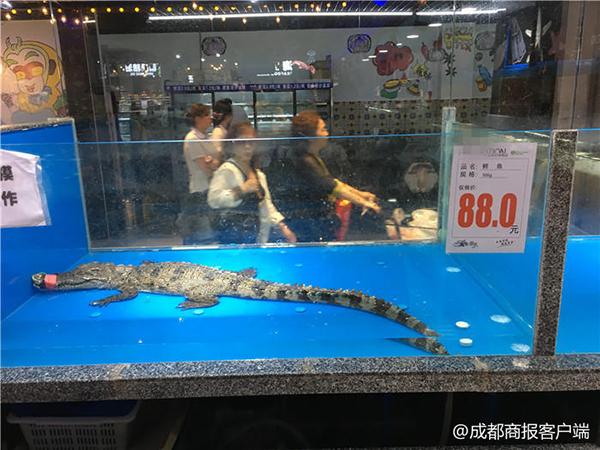 线上澳门赌博开户:成都一超市竟售卖中华鲟、鳄鱼、娃娃鱼,已交工商部门处理