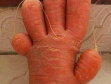 奇葩!这些蔬菜长成这个造型