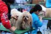 @济南人!萨摩耶、贵宾…这些狗狗,你可以免费领养