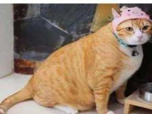 刚给猫猫剪完头发就后悔了