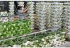 莱芜市农高区杨庄镇入选农业产业强镇示范建设名单