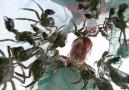 阳澄湖大闸蟹9月21日开捕,今年大个头的数量或远多于往年