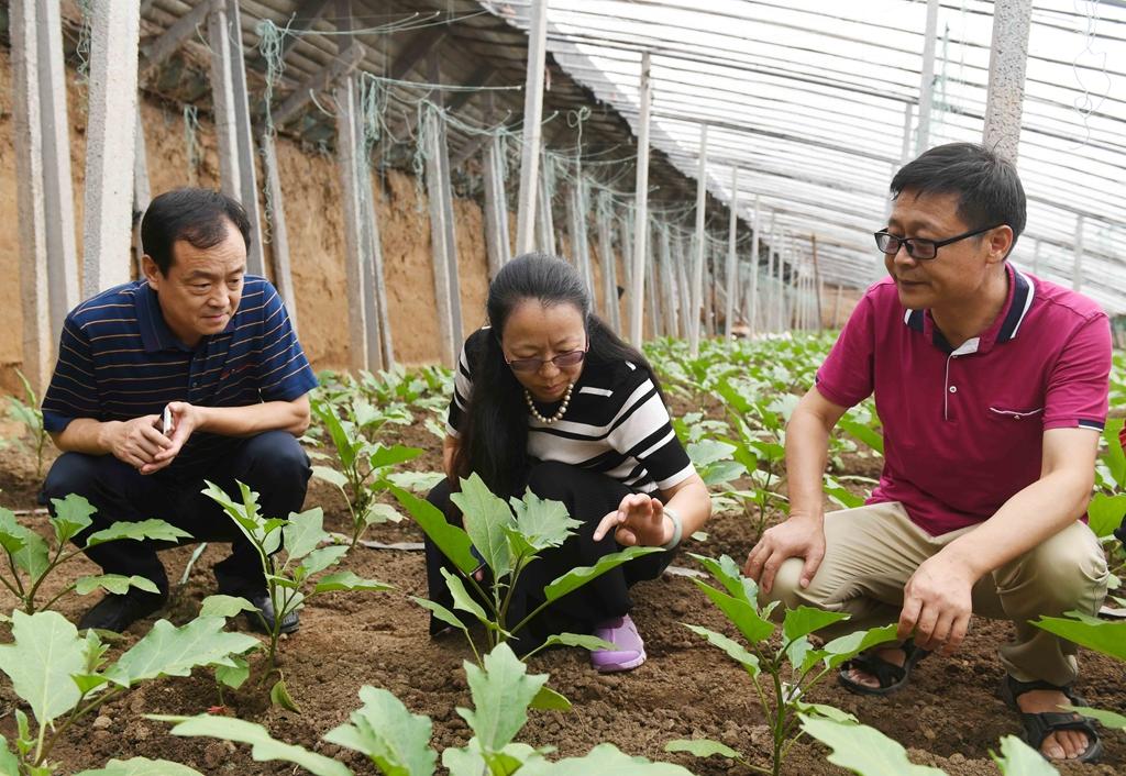 专家进菜棚 企业赠种苗 山东寿光菜农逐步恢复生产