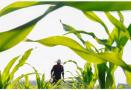 农民也能评职称 青岛培育百名现代青年农场主