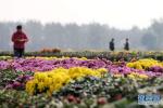 北戴河首届亲海赏菊文化节22日举行
