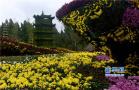 布展的菊花进入盛花期 开封府迎来参观热潮