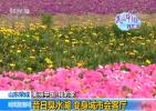 【美丽中国·我的家】山东荣成:昔日臭水湖 变身城市会客厅
