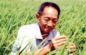 袁隆平:最幸福的事就是泡在田里