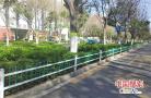 河南漯河:绿带添新装 好看又安全