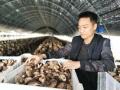 郟縣劉亞傑:大棚香菇撐起家門口創業致富夢