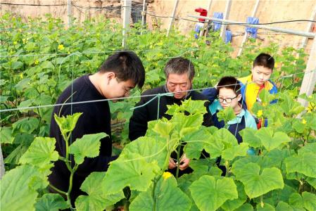 河南内黄:大棚蔬菜助农增收