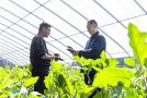 河南鲁山:发展种植产业干劲足