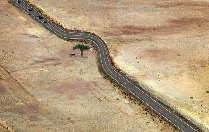 """给""""树""""让路 盘点令人拍案叫绝的设计"""