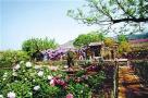 山东:乡村旅游未来3年吸纳200万名农民就业