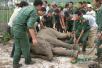 """当人和大象发生冲突,武警""""森林卫士""""选择……"""