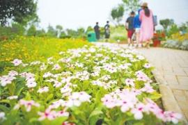 鄭州這兒有場免費花展 120種花等你來賞