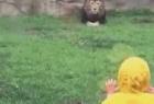 动物园猛兽扑萌娃