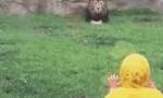 动物园猛兽扑萌娃 多亏隔着一面厚玻璃