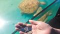 长沙烈士公园游客随手扔硬币 生生噎死大海龟(图)