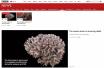 BBC:这是世界上最精细的磁共振神经网络扫描