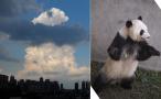 成都的云都这么萌!